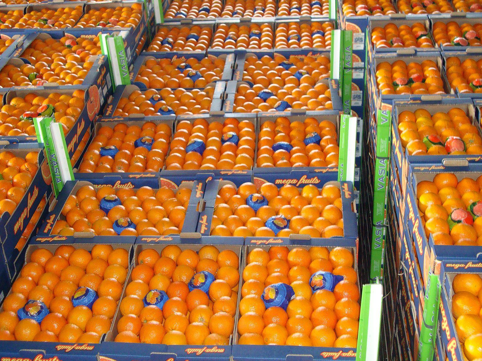 korivos-orange-2
